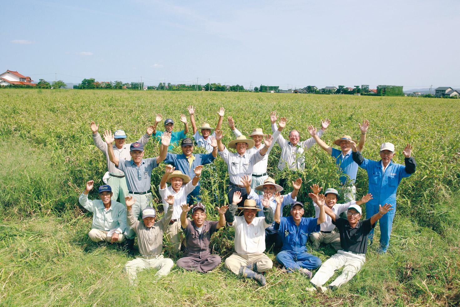 斐川のハトムギ畑